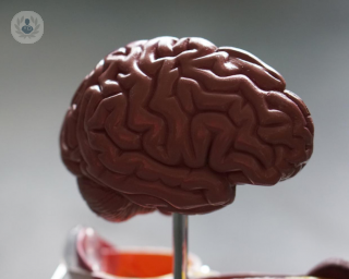 model of a brain for neurology patients