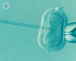 in_vitro_fertilisation