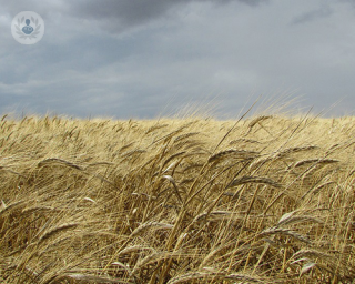 Ominous wheat