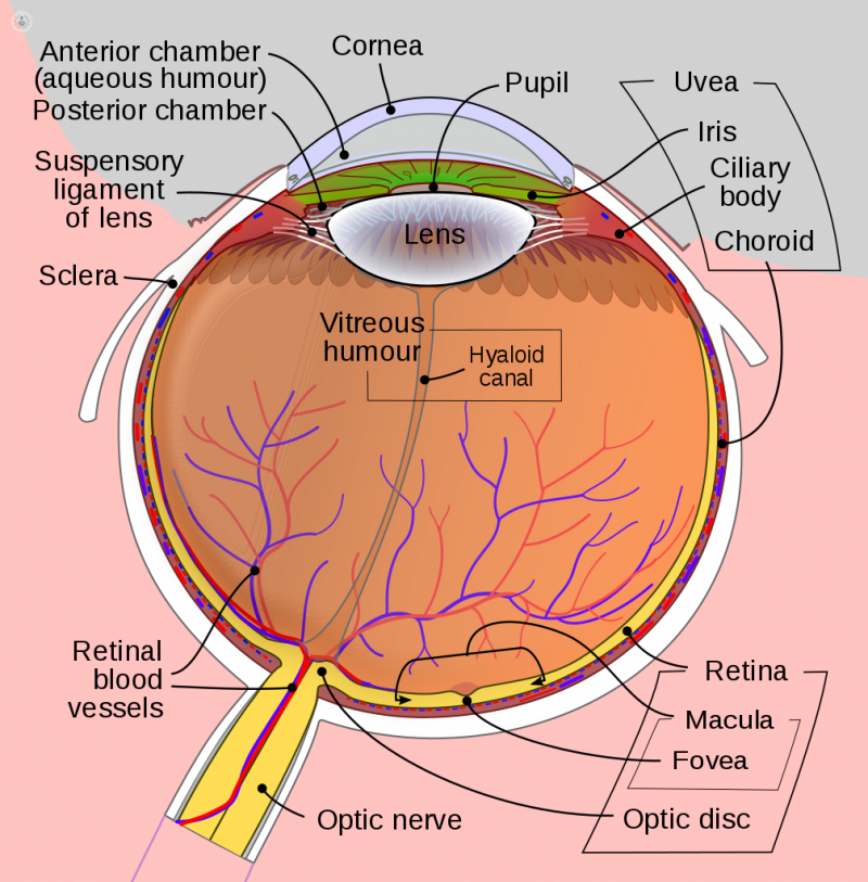 Fast facts about macular degeneration